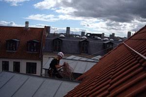 Sikring mod fugle og duer på bygninger og ejendomme