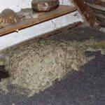 Hvordan fjerner man et hvepsebo