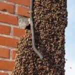 Bier hører også under skadedyrsbekæmpelse Odense