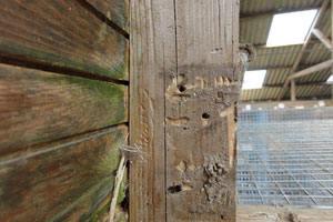 borebille bekæmpelse af træorm