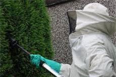 Fjernelse af hvepsebo i hæk i København