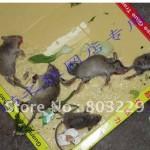 Limplader til rotter