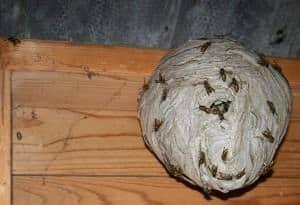 fjernelse af hvepsebo aarhus