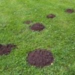 Bekæmpelse af muldvarpe med garanti