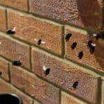 Humlebier i mur