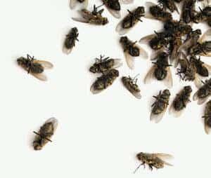 Gift mod klyngefluer til bekæmpelse