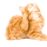 Kattelopper er værre end hundelopper