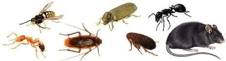 Skadedyrsbekæmpelse af alle slags skadedyr – landsdækkende skadedyrsservice | Chrisal A/S