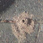 Jordbi laver huller og er bier i jorden